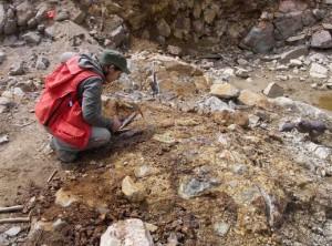 Российские ученые составили самую полную в мире палеобиологическую летопись